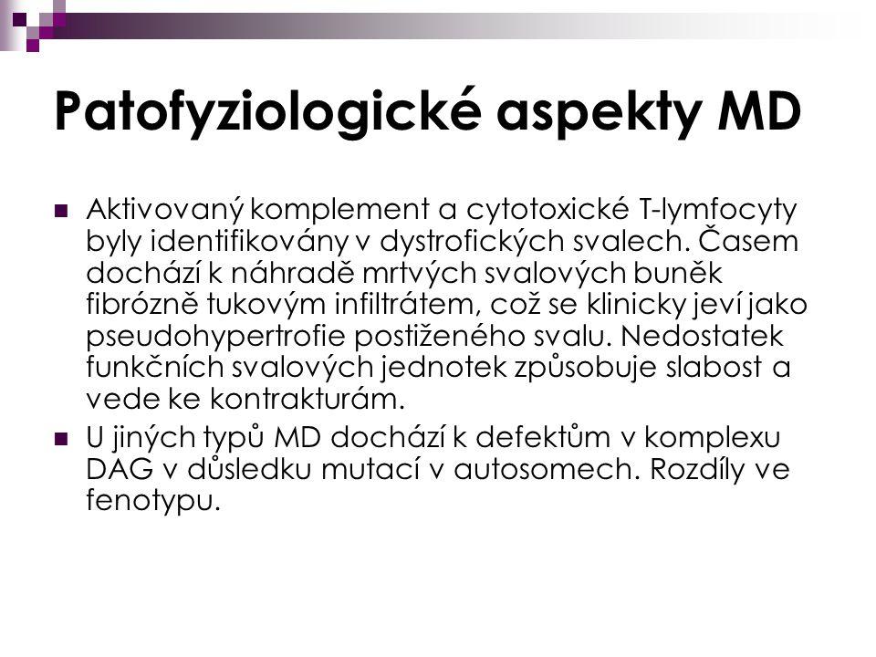 Patofyziologické aspekty MD Aktivovaný komplement a cytotoxické T-lymfocyty byly identifikovány v dystrofických svalech.