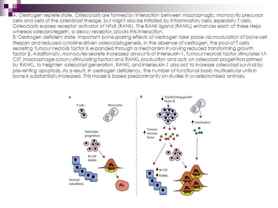 Receptor aktivátor NF-  B (RANK), jeho ligand (RANKL) a osteoprotegerin (OPG) Stimulátory resorbce kosti zvyšují expresi RANKL v osteoblastech a některé také snižují expresi OPG.