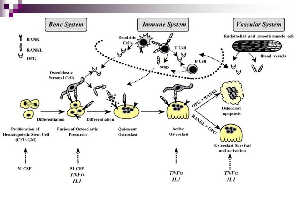 Klasifikace MD Genetické abnormality v genech pro specifické svalové bílkoviny (dystrofin).Klasifikace podle klinických fenotypů, patologie a způsobu dědičnosti.