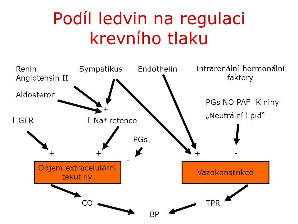 Podíl ledvin na regulaci krevního tlaku Objem extracelulární tekutiny Vazokonstrikce COTPR BP  GFR Na + retence Renin Angiotensin II Aldosteron Symp
