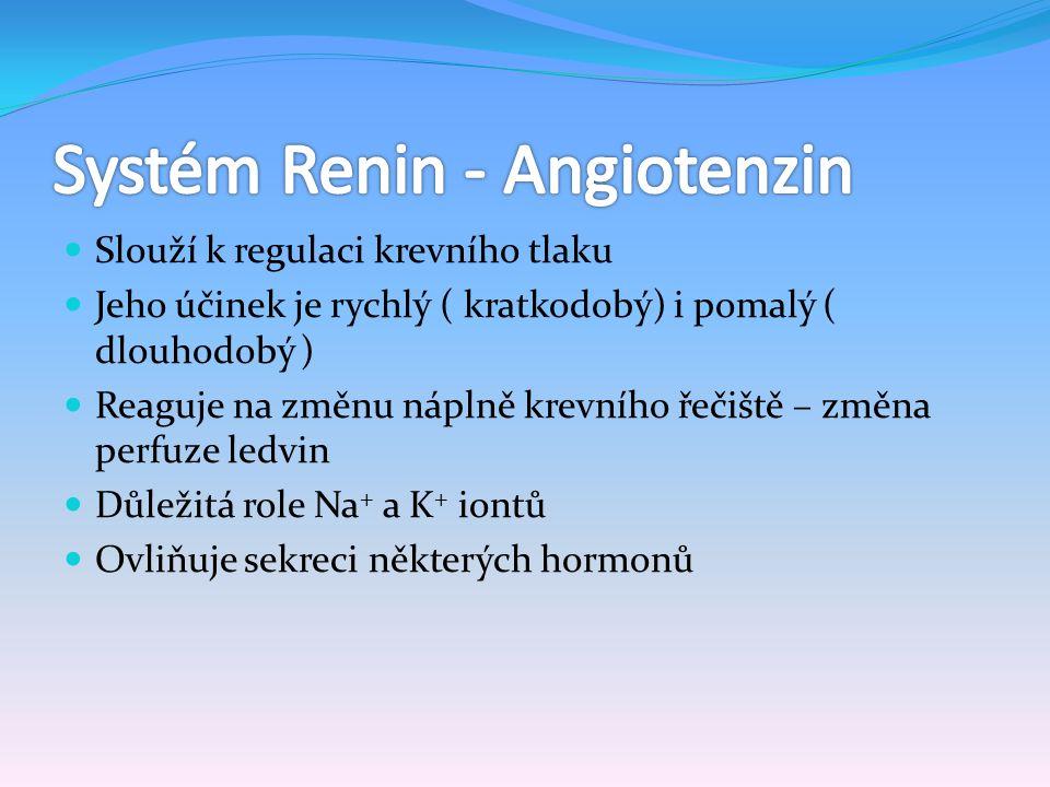 Enzym -angiotenzinogenáza Uvolňován juxtaglomerulárními buňkami ve stěnách aferentních arteriol ledvin při sníženém perfúzním tlaku ledvin, účinkem sympatiku Uchováván jako prekurzor – prorenin Konvertuje globulin angiotenzinogen na angiotenzin I.