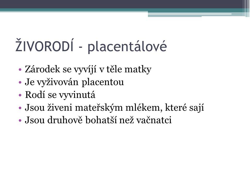 ŽIVORODÍ - placentálové Zárodek se vyvíjí v těle matky Je vyživován placentou Rodí se vyvinutá Jsou živeni mateřským mlékem, které sají Jsou druhově b