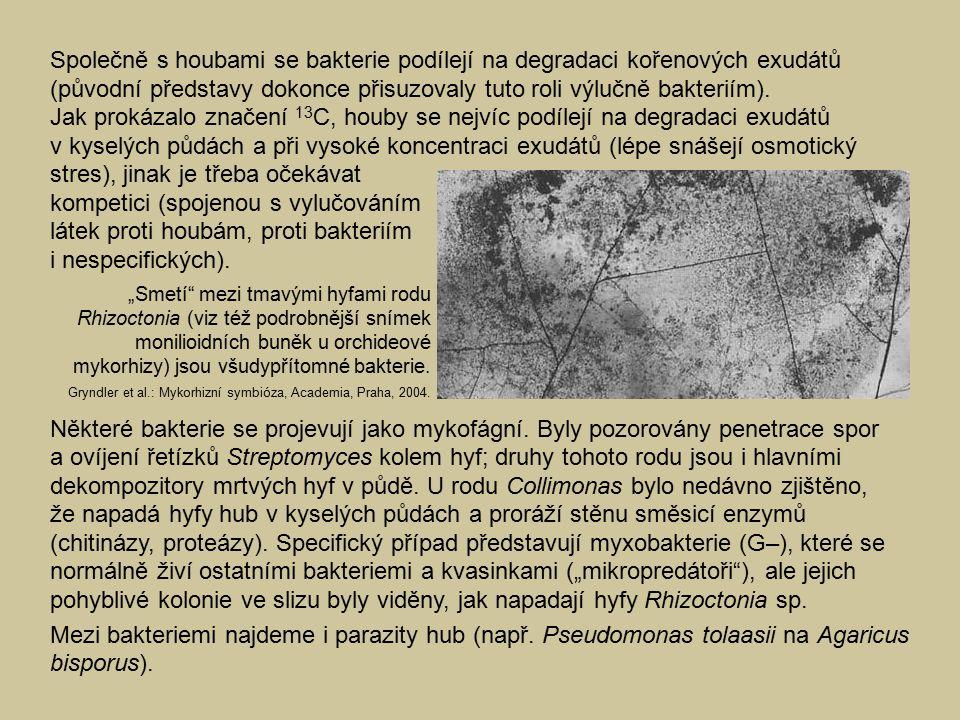 Společně s houbami se bakterie podílejí na degradaci kořenových exudátů (původní představy dokonce přisuzovaly tuto roli výlučně bakteriím).