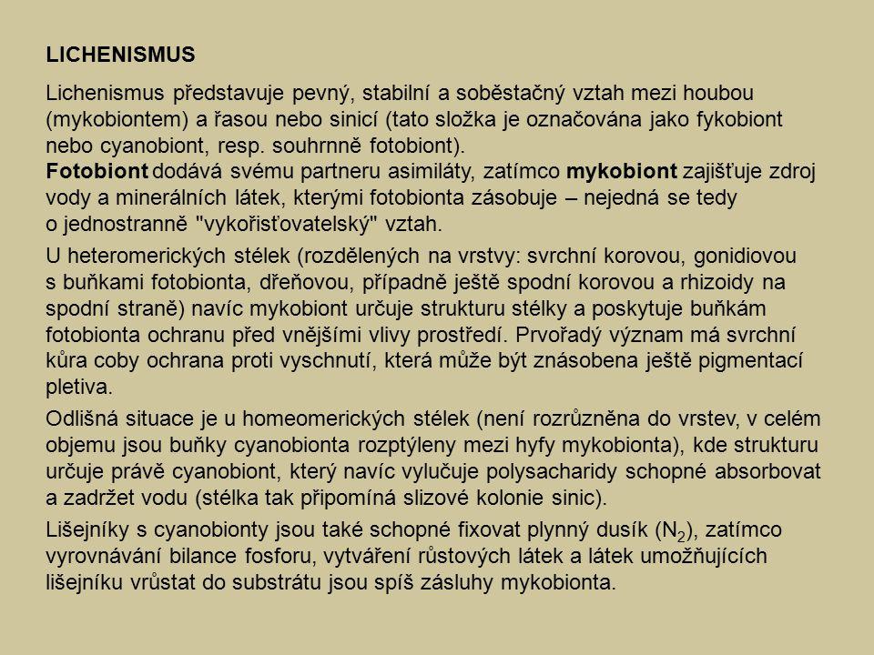 LICHENISMUS Lichenismus představuje pevný, stabilní a soběstačný vztah mezi houbou (mykobiontem) a řasou nebo sinicí (tato složka je označována jako fykobiont nebo cyanobiont, resp.