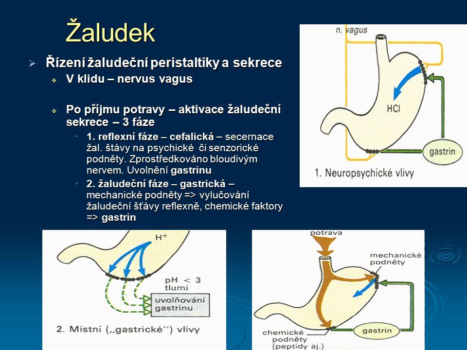 Žaludek  Řízení žaludeční peristaltiky a sekrece  V klidu – nervus vagus  Po příjmu potravy – aktivace žaludeční sekrece – 3 fáze 1. reflexní fáze