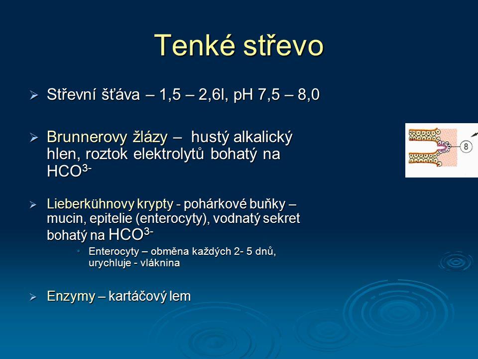 Tenké střevo  Střevní šťáva – 1,5 – 2,6l, pH 7,5 – 8,0  Brunnerovy žlázy – hustý alkalický hlen, roztok elektrolytů bohatý na HCO 3-  Lieberkühnovy