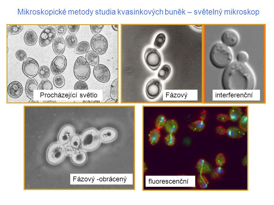Elektronová mikroskopie kvasinkových buněk Ultratenký řez, fixovaná buňka Mrazové lámání, buňka fixovaná reversibilně
