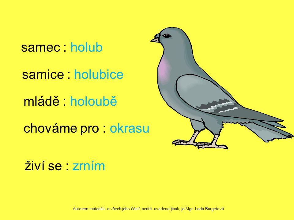 samec : holub samice : holubice mládě : holoubě chováme pro : okrasu živí se : zrním Autorem materiálu a všech jeho částí, není-li uvedeno jinak, je Mgr.