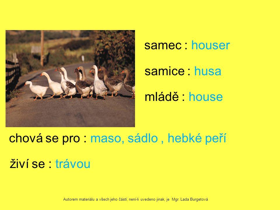 samec : houser samice : husa mládě : house chová se pro : maso, sádlo, hebké peří živí se : trávou Autorem materiálu a všech jeho částí, není-li uvedeno jinak, je Mgr.