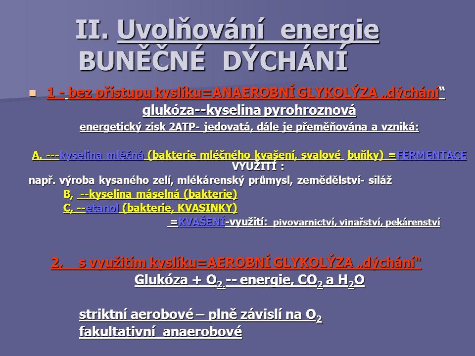 """II. Uvolňování energie BUNĚČNÉ DÝCHÁNÍ II. Uvolňování energie BUNĚČNÉ DÝCHÁNÍ 1 - bez přístupu kyslíku=ANAEROBNÍ GLYKOLÝZA """"dýchání"""" 1 - bez přístupu"""