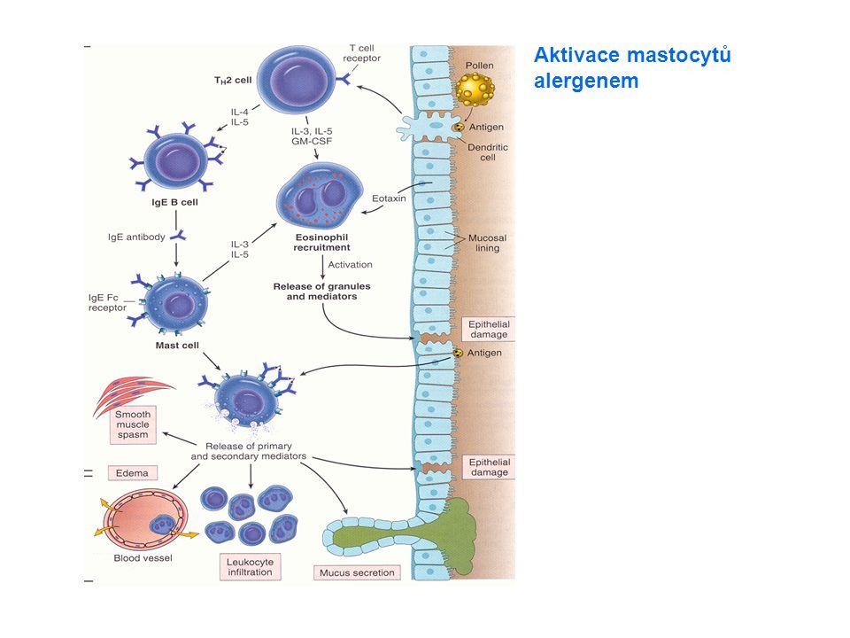Aktivace mastocytů alergenem