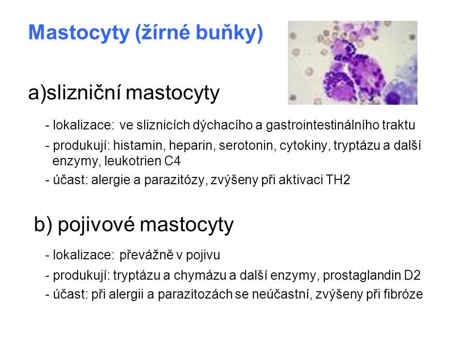 Mastocyty (žírné buňky) a)slizniční mastocyty - lokalizace: ve sliznicích dýchacího a gastrointestinálního traktu - produkují: histamin, heparin, sero
