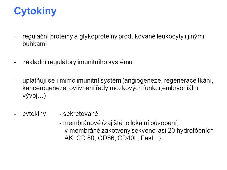 Cytokiny -regulační proteiny a glykoproteiny produkované leukocyty i jinými buňkami -základní regulátory imunitního systému -uplatňují se i mimo imuni