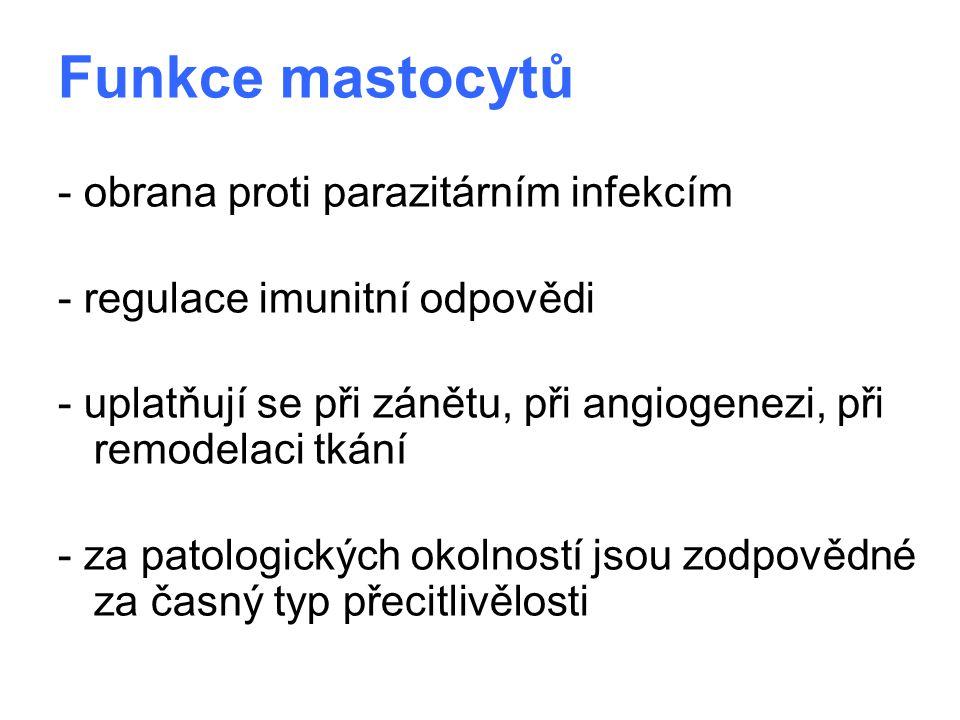 Funkce mastocytů - obrana proti parazitárním infekcím - regulace imunitní odpovědi - uplatňují se při zánětu, při angiogenezi, při remodelaci tkání -
