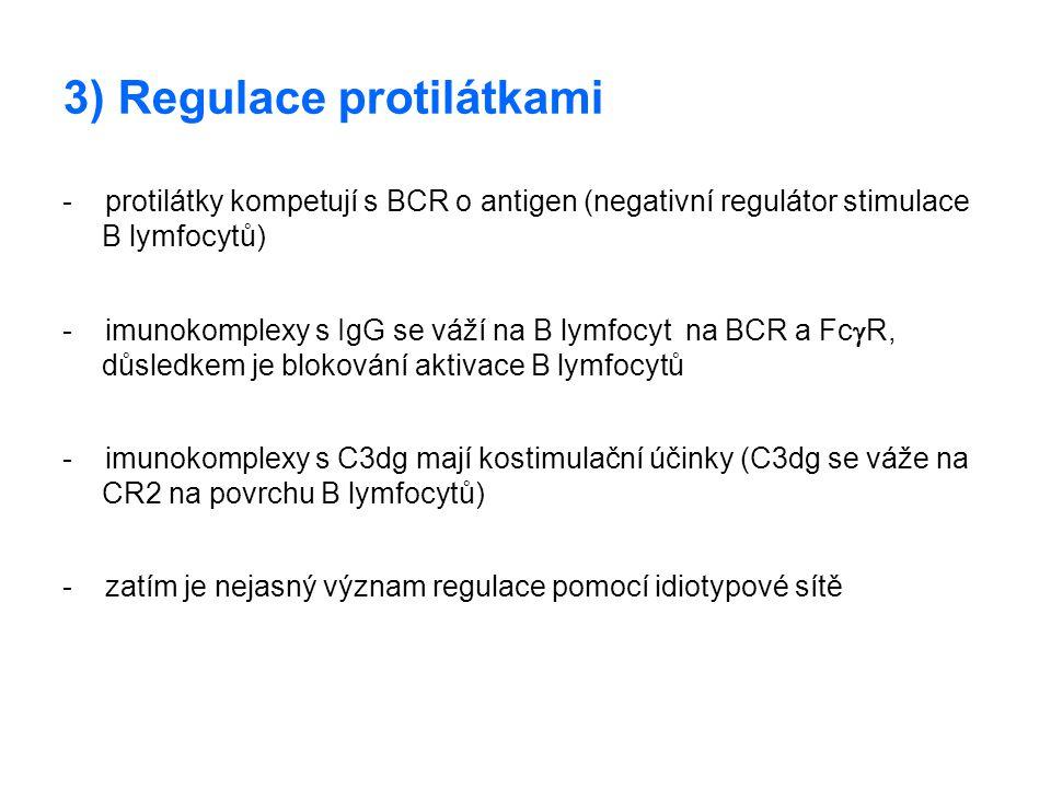 3) Regulace protilátkami - protilátky kompetují s BCR o antigen (negativní regulátor stimulace B lymfocytů) - imunokomplexy s IgG se váží na B lymfocy