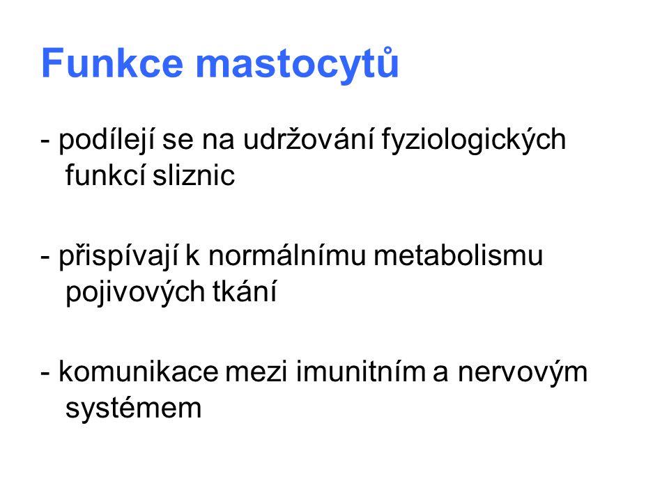 Funkce mastocytů - podílejí se na udržování fyziologických funkcí sliznic - přispívají k normálnímu metabolismu pojivových tkání - komunikace mezi imu