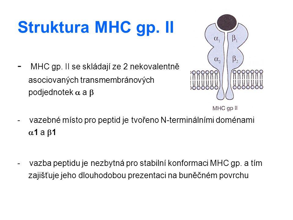 Struktura MHC gp. II - MHC gp. II se skládají ze 2 nekovalentně asociovaných transmembránových podjednotek  a  - vazebné místo pro peptid je tvořeno