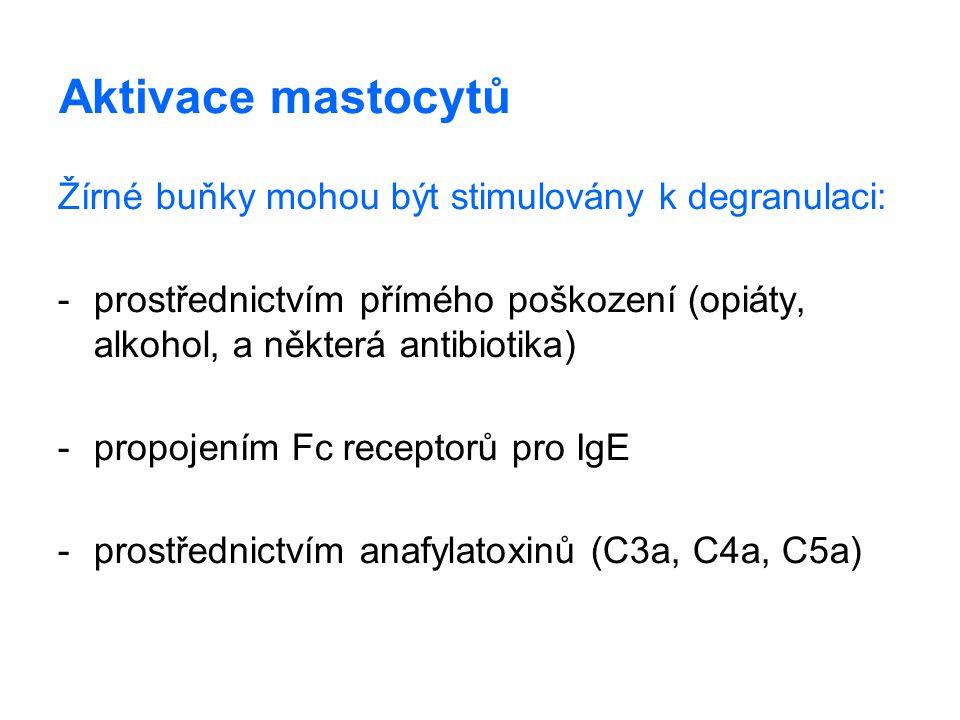 Aktivace mastocytů Žírné buňky mohou být stimulovány k degranulaci: -prostřednictvím přímého poškození (opiáty, alkohol, a některá antibiotika) -propo
