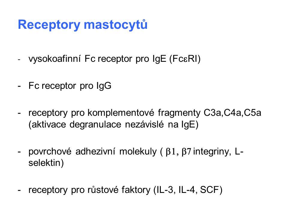 Receptory mastocytů - vysokoafinní Fc receptor pro IgE (Fc  RI) - Fc receptor pro IgG - receptory pro komplementové fragmenty C3a,C4a,C5a (aktivace d