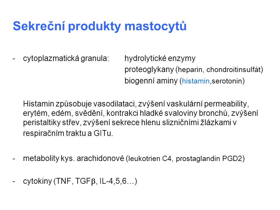 Sekreční produkty mastocytů - cytoplazmatická granula:hydrolytické enzymy proteoglykany ( heparin, chondroitinsulfát ) biogenní aminy ( histamin,serot
