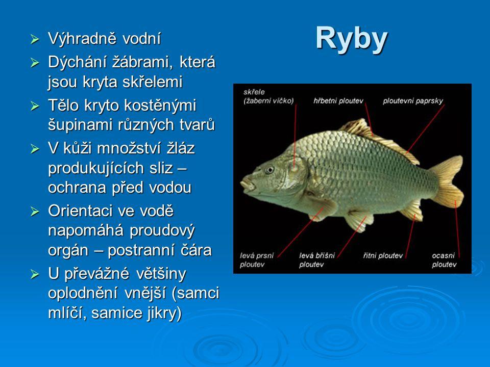 Ryby  Výhradně vodní  Dýchání žábrami, která jsou kryta skřelemi  Tělo kryto kostěnými šupinami různých tvarů  V kůži množství žláz produkujících