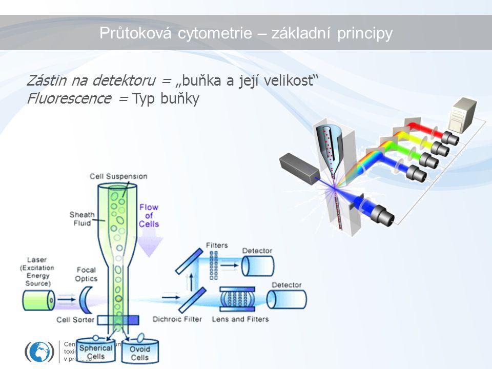 """Zástin na detektoru = """"buňka a její velikost"""" Fluorescence = Typ buňky Průtoková cytometrie – základní principy"""