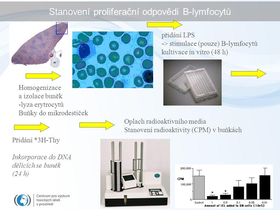 Homogenizace a izolace buněk -lyza erytrocytů Buňky do mikrodestiček přidání LPS -> stimulace (pouze) B-lymfocytů kultivace in vitro (48 h) Přidání *3