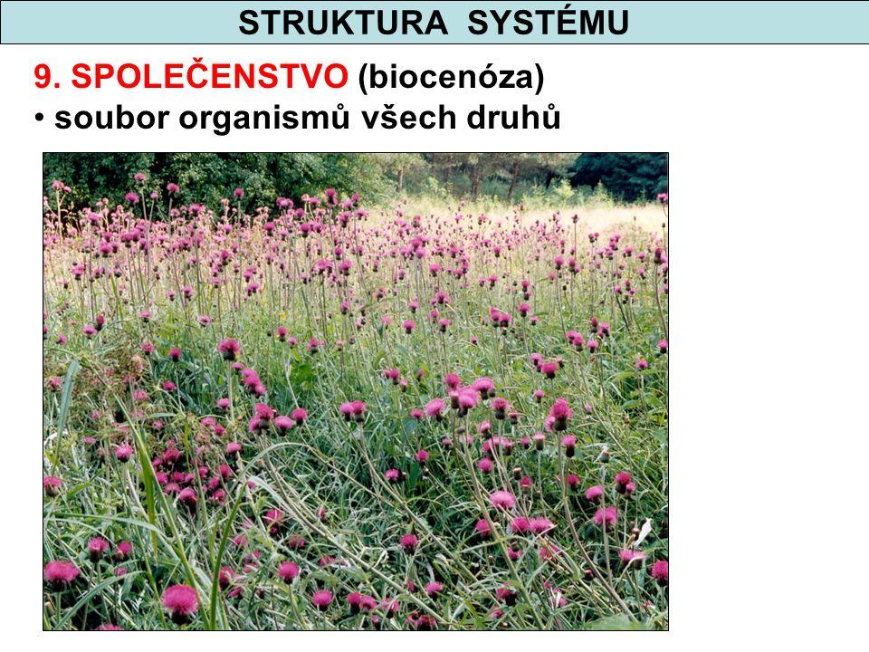 STRUKTURA SYSTÉMU 9. SPOLEČENSTVO (biocenóza) soubor organismů všech druhů