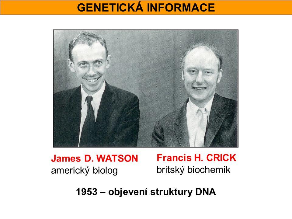 GENETICKÁ INFORMACE James D. WATSON americký biolog Francis H. CRICK britský biochemik 1953 – objevení struktury DNA