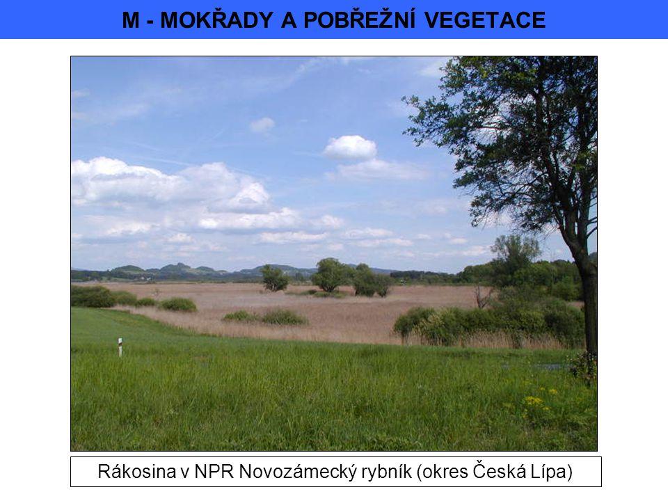 M - MOKŘADY A POBŘEŽNÍ VEGETACE Rákosina v NPR Novozámecký rybník (okres Česká Lípa)