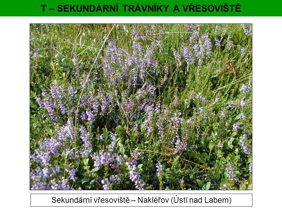 T – SEKUNDÁRNÍ TRÁVNÍKY A VŘESOVIŠTĚ Sekundární vřesoviště – Nakléřov (Ústí nad Labem)