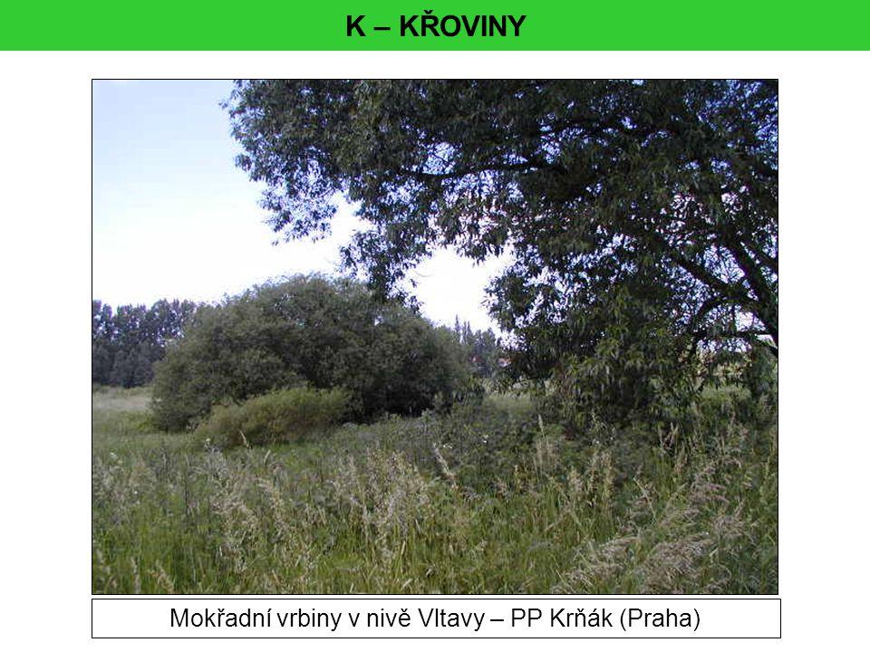 K – KŘOVINY Mokřadní vrbiny v nivě Vltavy – PP Krňák (Praha)