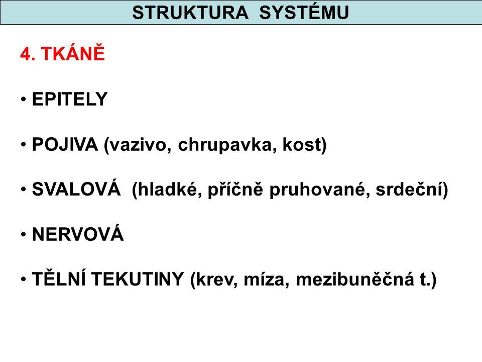 STRUKTURA SYSTÉMU 5. ORGÁNY
