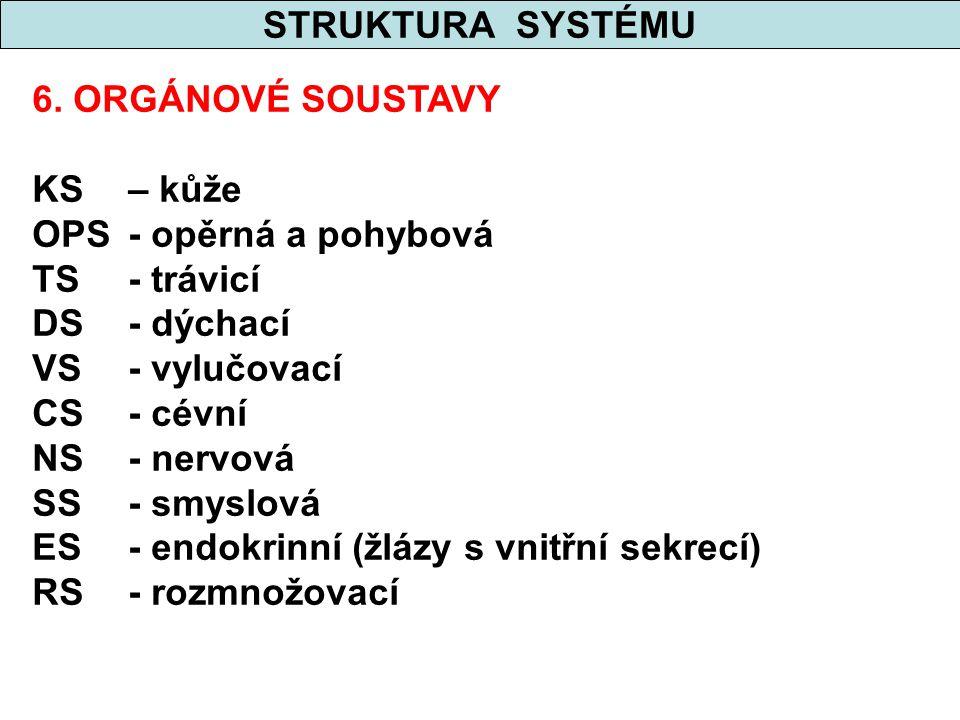 STRUKTURA SYSTÉMU 6. ORGÁNOVÉ SOUSTAVY KS – kůže OPS- opěrná a pohybová TS- trávicí DS- dýchací VS- vylučovací CS- cévní NS- nervová SS- smyslová ES-