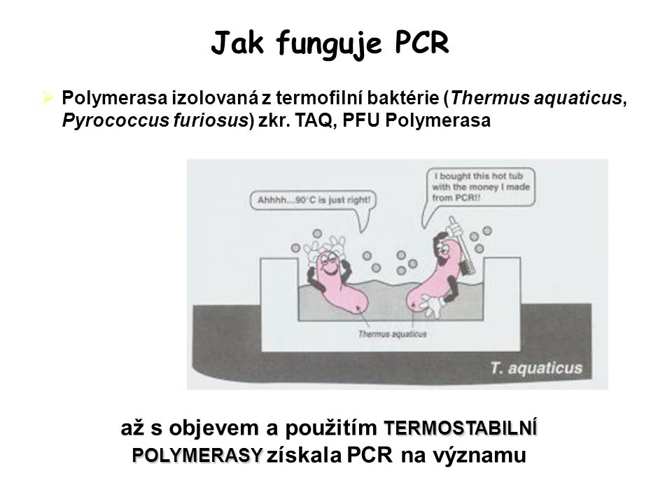  Polymerasa izolovaná z termofilní baktérie (Thermus aquaticus, Pyrococcus furiosus) zkr.