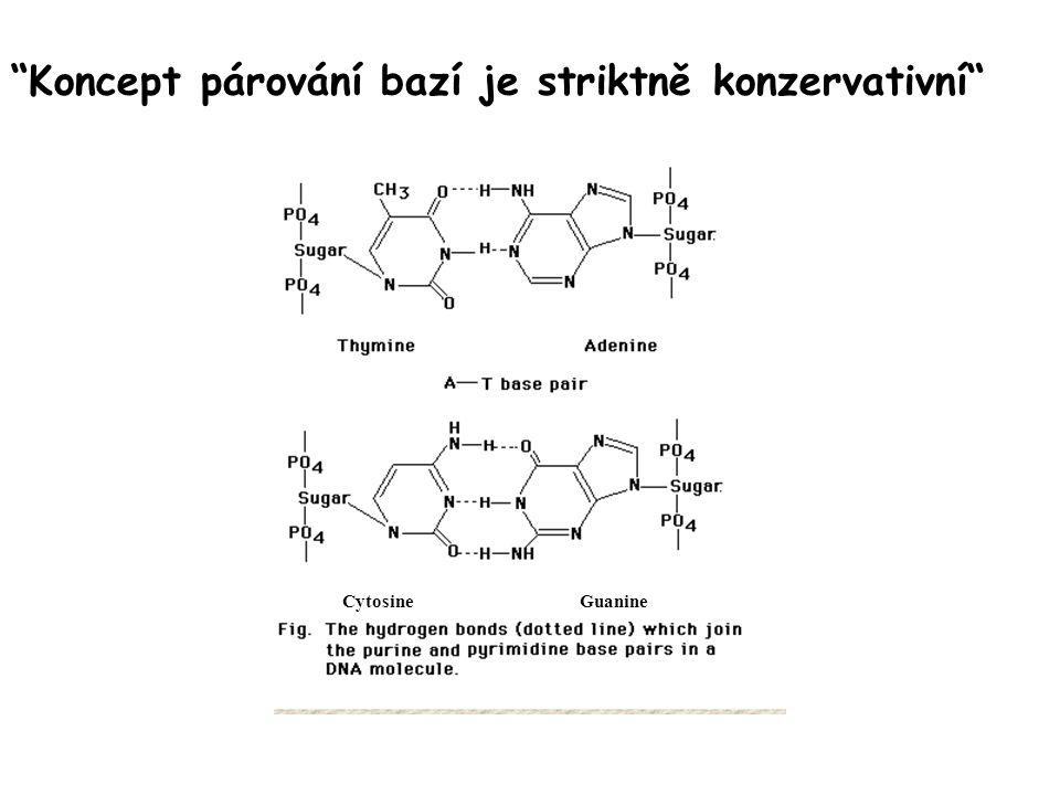 Koncept párování bazí je striktně konzervativní CytosineGuanine