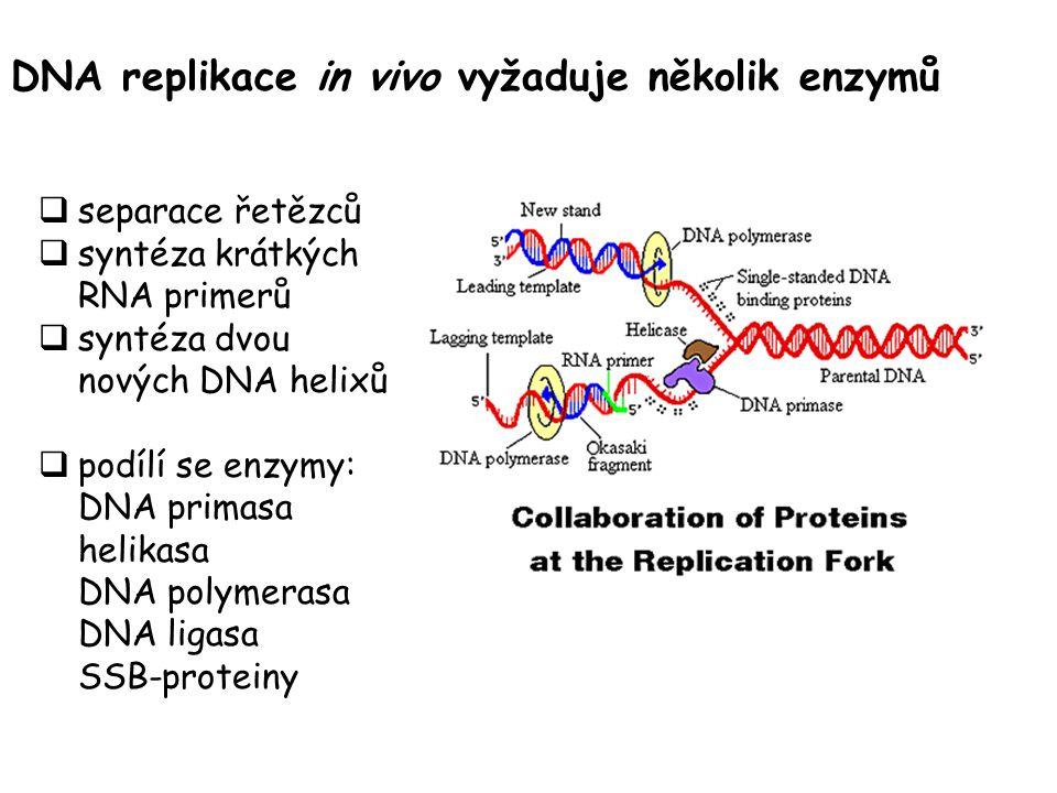 DNA replikace in vivo vyžaduje několik enzymů  separace řetězců  syntéza krátkých RNA primerů  syntéza dvou nových DNA helixů  podílí se enzymy: DNA primasa helikasa DNA polymerasa DNA ligasa SSB-proteiny