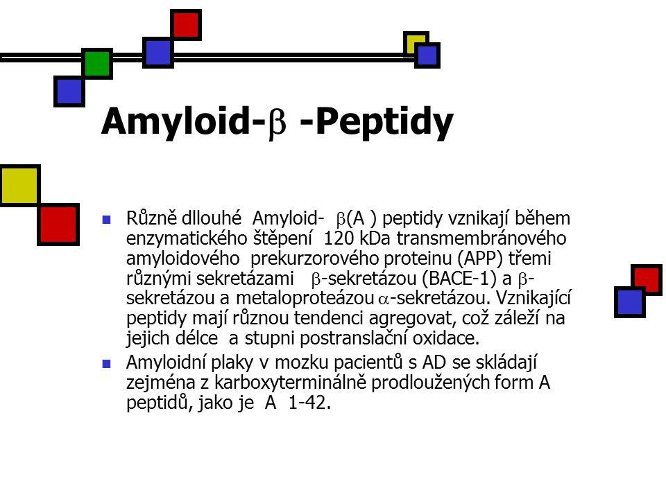 Amyloid-  -Peptidy Různě dllouhé Amyloid-  (A ) peptidy vznikají během enzymatického štěpení 120 kDa transmembránového amyloidového prekurzorového proteinu (APP) třemi různými sekretázami  -sekretázou (BACE-1) a  - sekretázou a metaloproteázou  -sekretázou.