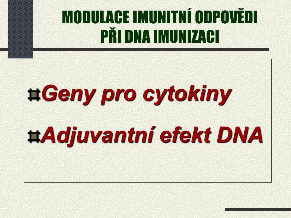 MODULACE IMUNITNÍ ODPOVĚDI PŘI DNA IMUNIZACI Geny pro cytokiny Adjuvantní efekt DNA
