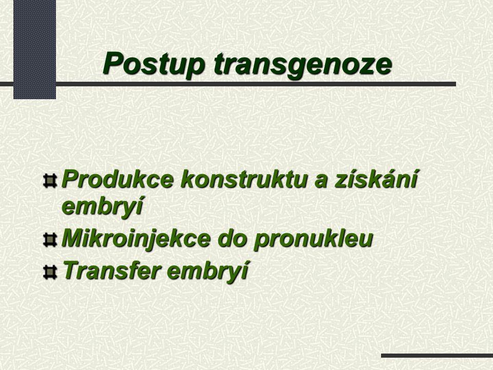 Postup transgenoze Produkce konstruktu a získání embryí Mikroinjekce do pronukleu Transfer embryí