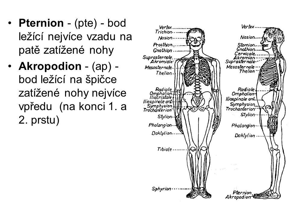 Pternion - (pte) - bod ležící nejvíce vzadu na patě zatížené nohy Akropodion - (ap) - bod ležící na špičce zatížené nohy nejvíce vpředu (na konci 1. a