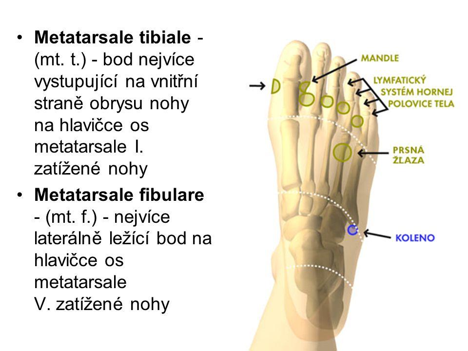 Metatarsale tibiale - (mt. t.) - bod nejvíce vystupující na vnitřní straně obrysu nohy na hlavičce os metatarsale I. zatížené nohy Metatarsale fibular