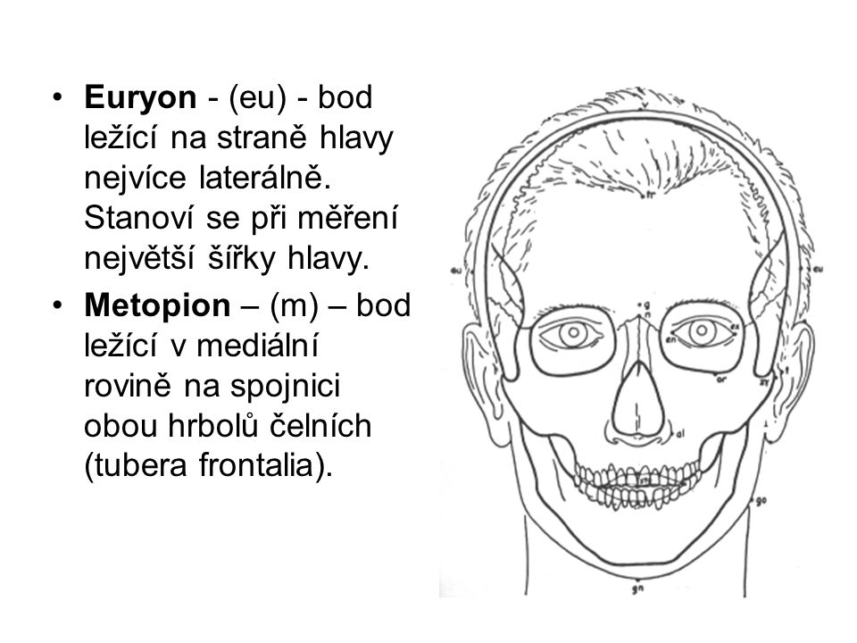 Euryon - (eu) - bod ležící na straně hlavy nejvíce laterálně. Stanoví se při měření největší šířky hlavy. Metopion – (m) – bod ležící v mediální rovin