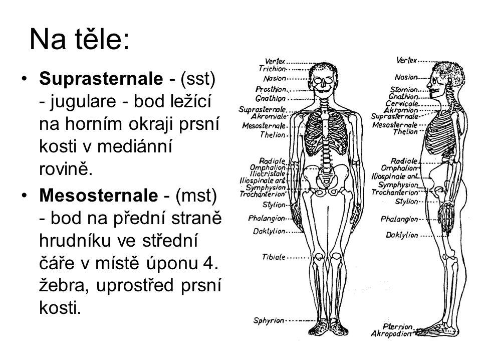 Na těle: Suprasternale - (sst) - jugulare - bod ležící na horním okraji prsní kosti v mediánní rovině. Mesosternale - (mst) - bod na přední straně hru