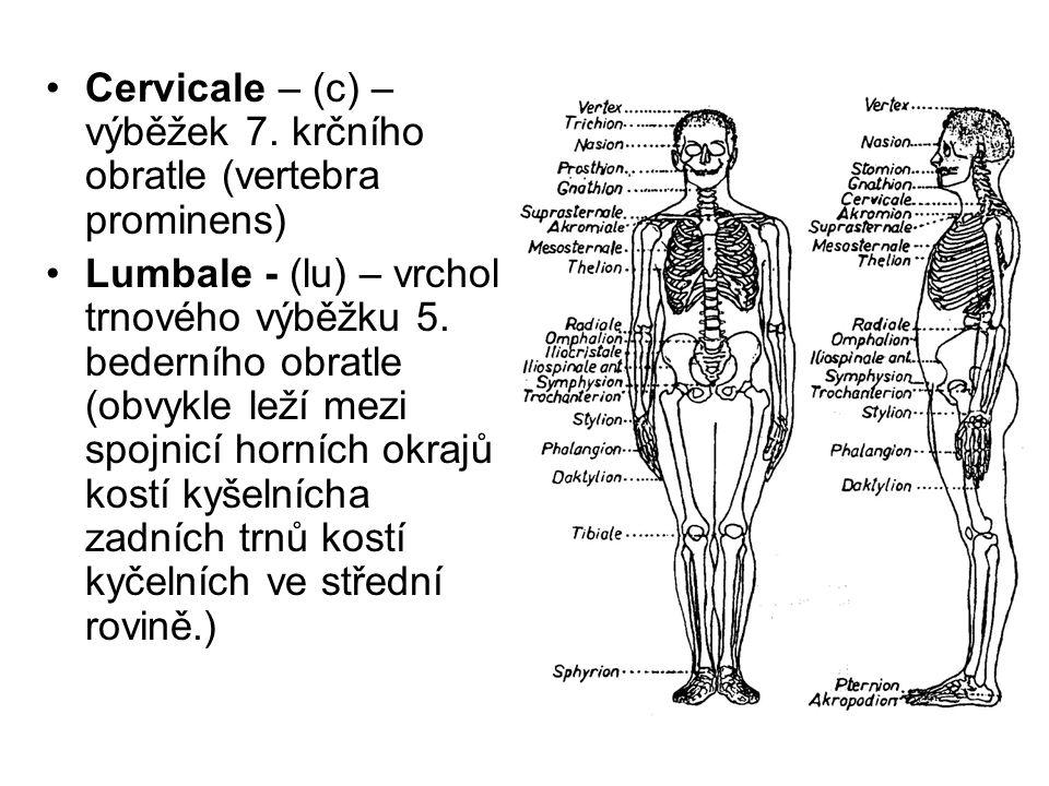 Cervicale – (c) – výběžek 7. krčního obratle (vertebra prominens) Lumbale - (lu) – vrchol trnového výběžku 5. bederního obratle (obvykle leží mezi spo