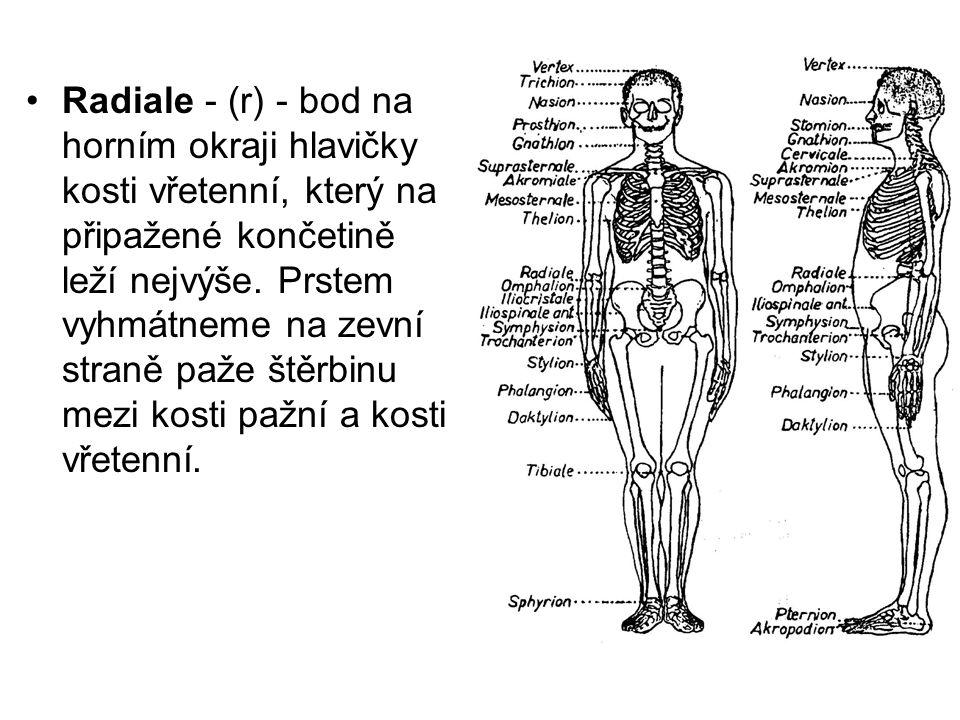 Radiale - (r) - bod na horním okraji hlavičky kosti vřetenní, který na připažené končetině leží nejvýše. Prstem vyhmátneme na zevní straně paže štěrbi