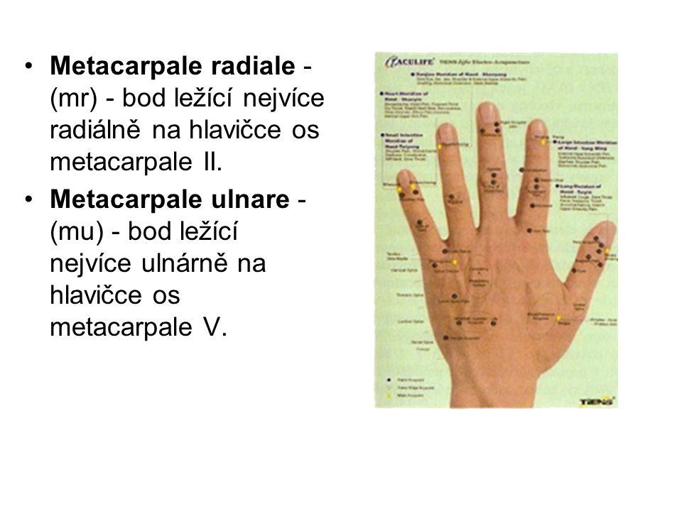 Metacarpale radiale - (mr) - bod ležící nejvíce radiálně na hlavičce os metacarpale II. Metacarpale ulnare - (mu) - bod ležící nejvíce ulnárně na hlav
