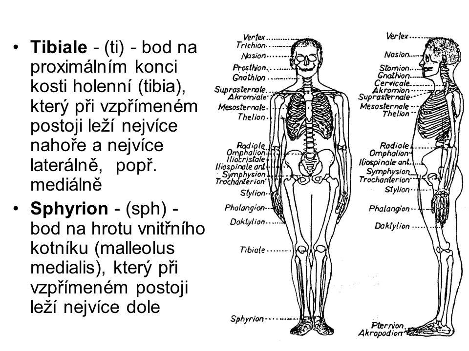 Tibiale - (ti) - bod na proximálním konci kosti holenní (tibia), který při vzpřímeném postoji leží nejvíce nahoře a nejvíce laterálně, popř. mediálně
