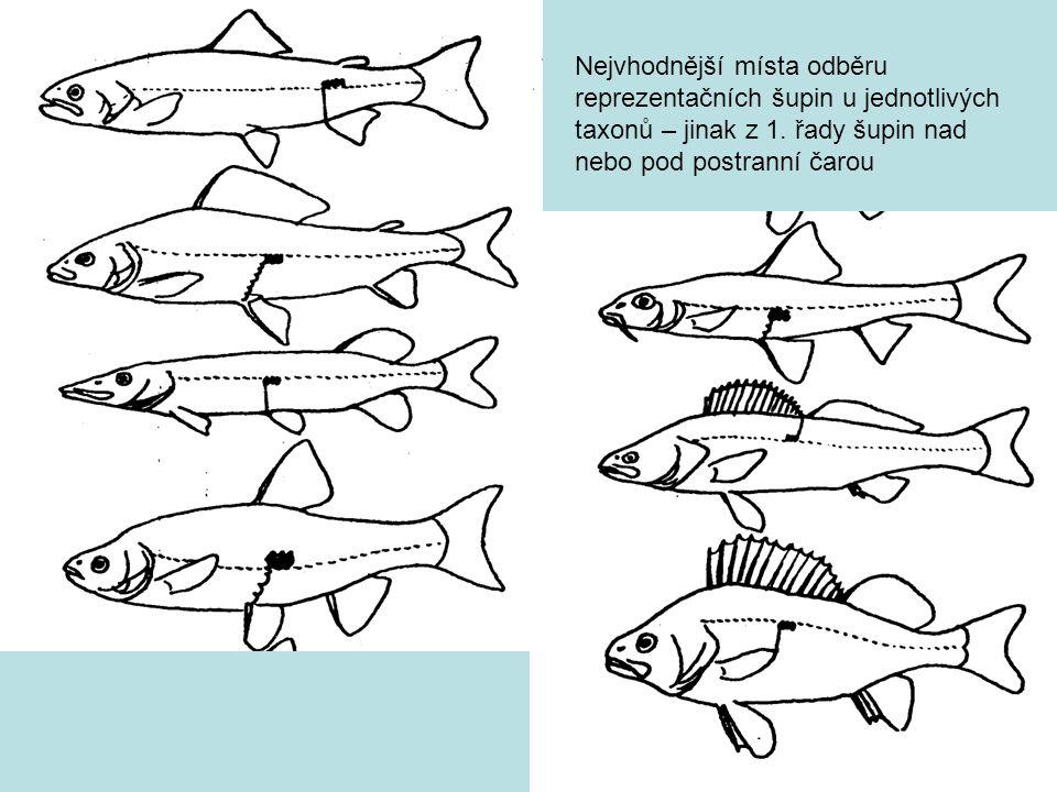 Nejvhodnější místa odběru reprezentačních šupin u jednotlivých taxonů – jinak z 1. řady šupin nad nebo pod postranní čarou