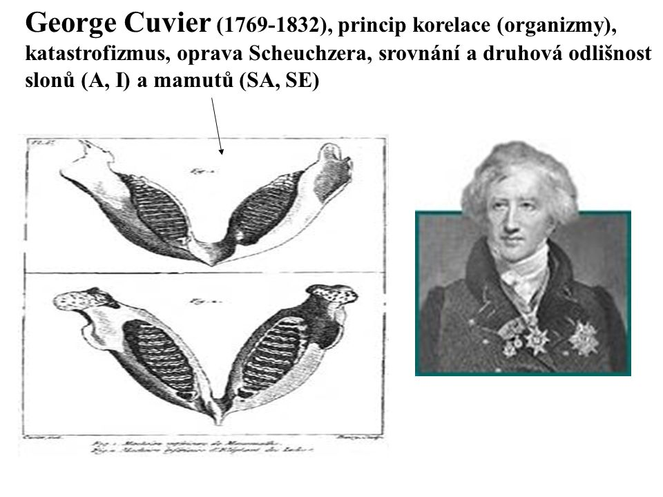 George Cuvier (1769-1832), princip korelace (organizmy), katastrofizmus, oprava Scheuchzera, srovnání a druhová odlišnost slonů (A, I) a mamutů (SA, S